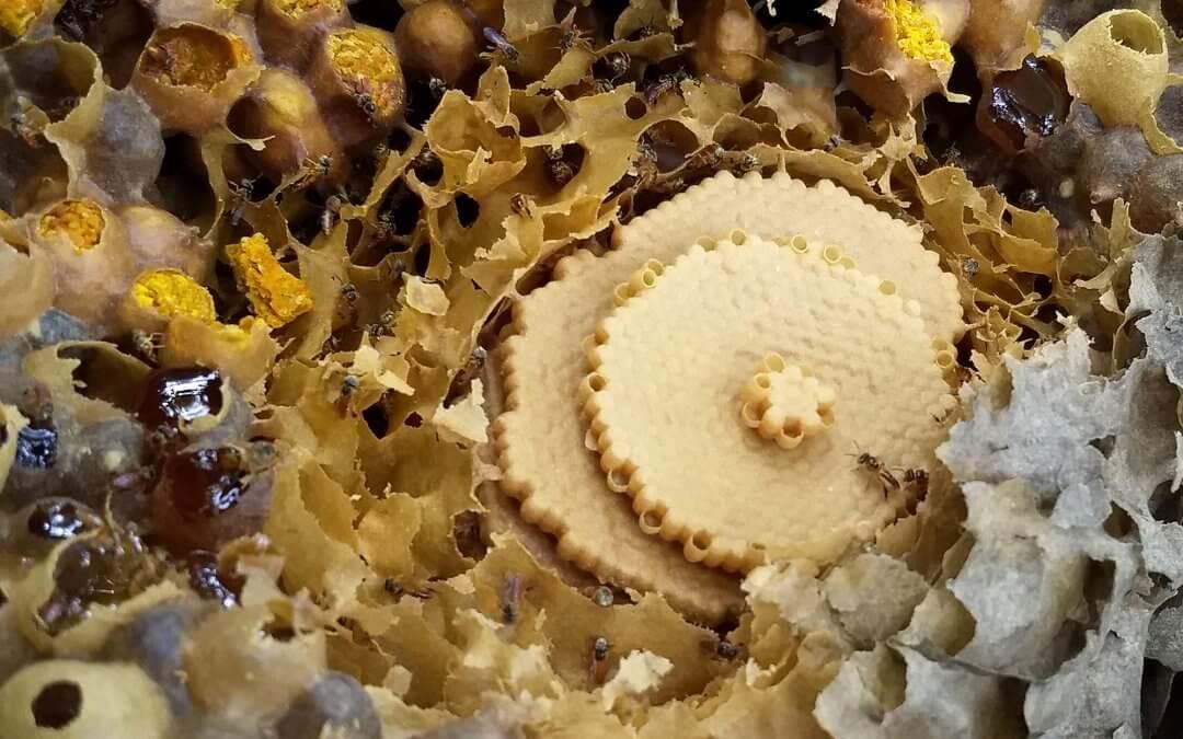 Curso de Meliponicultura – manejo de abelhas sem ferrão (2ª parte)