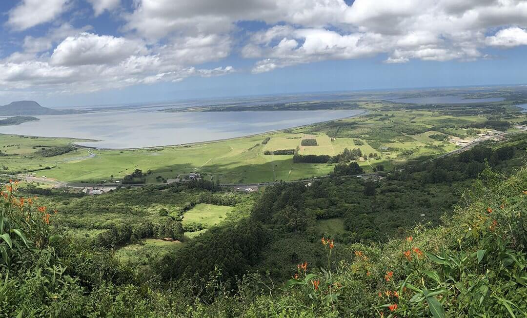 DATA TRANSFERIDA – Chuva de sementes de juçara nos céus de Osório