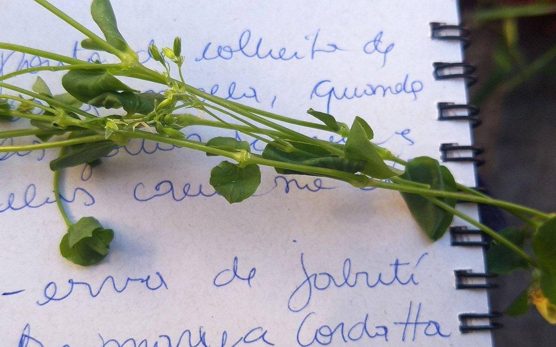 Maquiné terá vivência sobre as plantas alimentícias não convencionais (PANC)