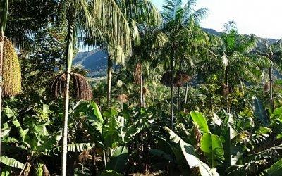 Dia da Árvore – Projeto Taramandahy comemora com as quase 9 mil mudas produzidas